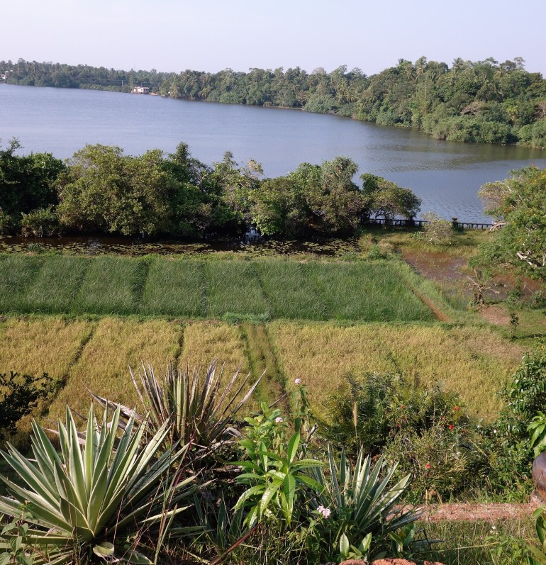 Paddy fields at Lunugunga, Sri Lankan Architect, Geoffrey Bawa's country estate.